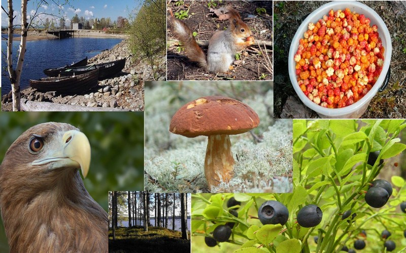 all_about_of_Karelia