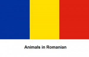 Animals in Romanian