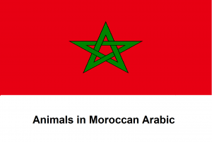Animals in Moroccan Arabic